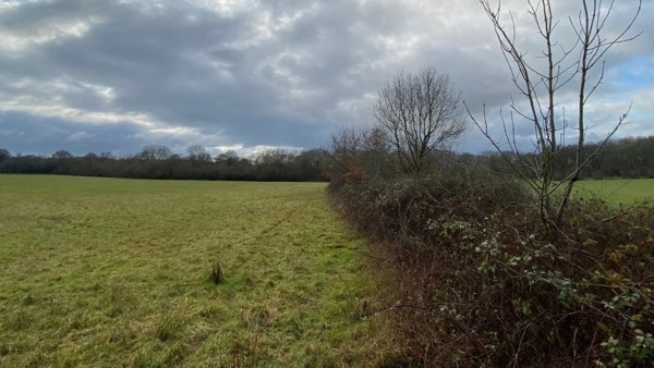 West Horsley Place Partners with Surrey Wildlife Trust for the Hedgerows Heritage Project